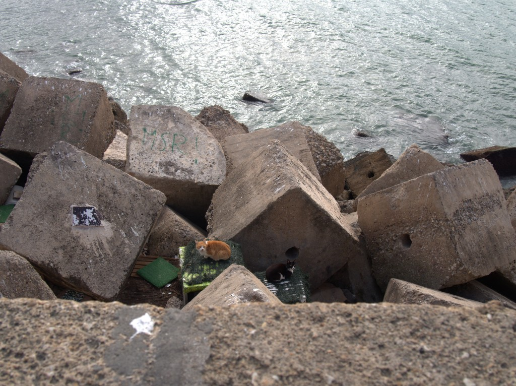 The stray cats in Cadiz are looked after, people have built them homes on the rocks and come around to feed them on a regular basis.