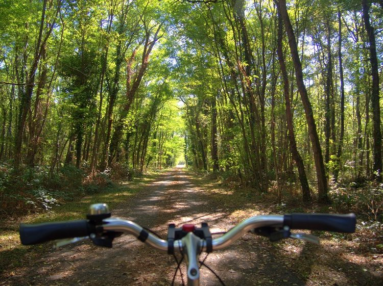 Biking through the forests of the Loire Valley.