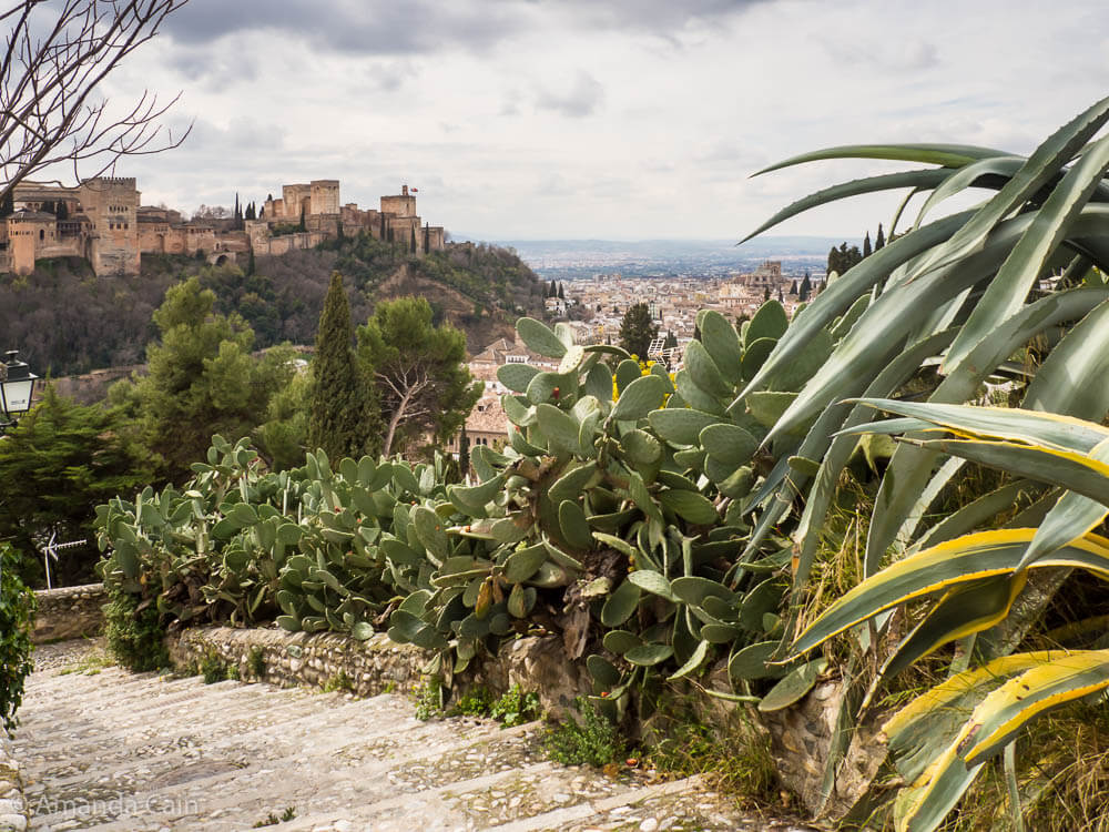 A picture of the view over Granada and the Alhambra palace with prickly pear cacti in the foreground.