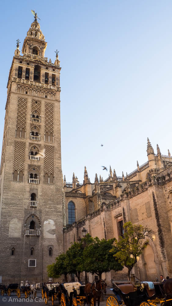 The Giralda, the bell tower of Seville Cathedral.