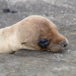 A picture of a baby sea lion waiting for its mother to come back.