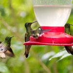 Hummingbirds at a bird feeder.