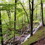 The endless waterfalls of Plitvička Lakes.