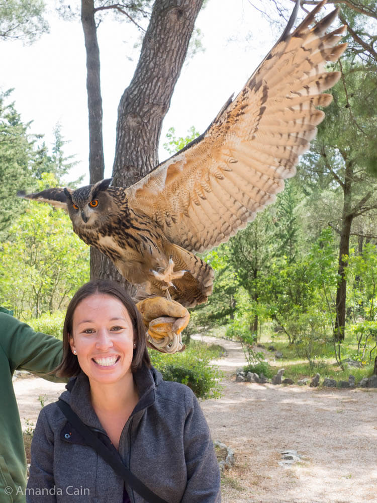 Mordecai the eagle owl at the Sokolarski Centre. They take in injured raptors and rehabilitate them before releasing them back into the wild. Mordecai is one of the permanent residents who can't be released due to her injuries.