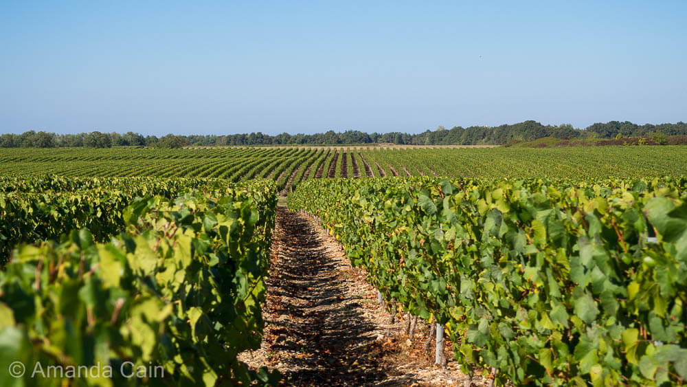 Vineyards in the Loire Valley.