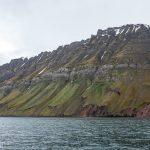 During breeding season these cliffs are full of nesting migratory birds. Because of all the bird droppings it's considered to be the greenest place in Svalbard.