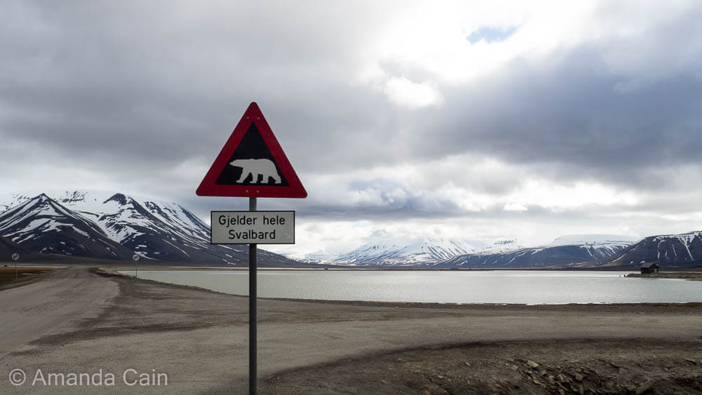 Svalbard is full of polar bears. Every group that leaves town must carry a gun with them for protection.
