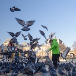 Pigeon feeding frenzy outside Notre Dame in Paris.