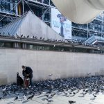 Pigeons wait patiently for the old man to feed them.