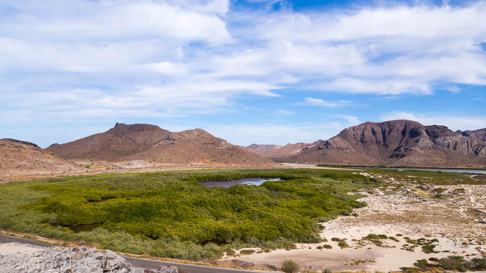 The only greenery in the La Paz area comes from mangroves.