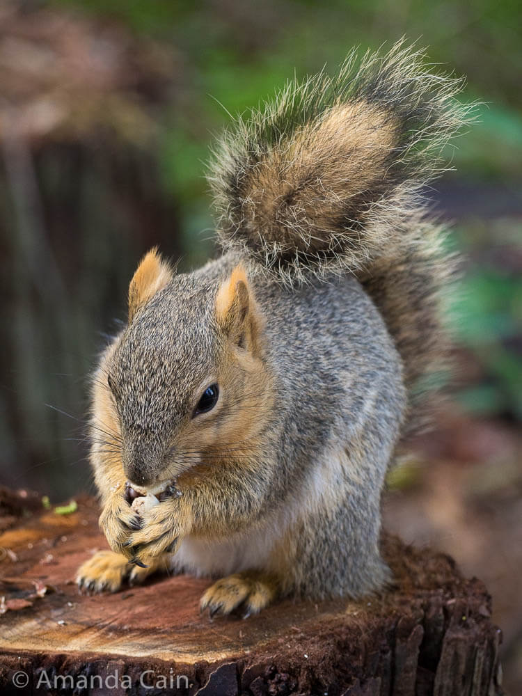 So we went to the world famous San Diego Zoo, and then spent ages taking photos of a squirrel.