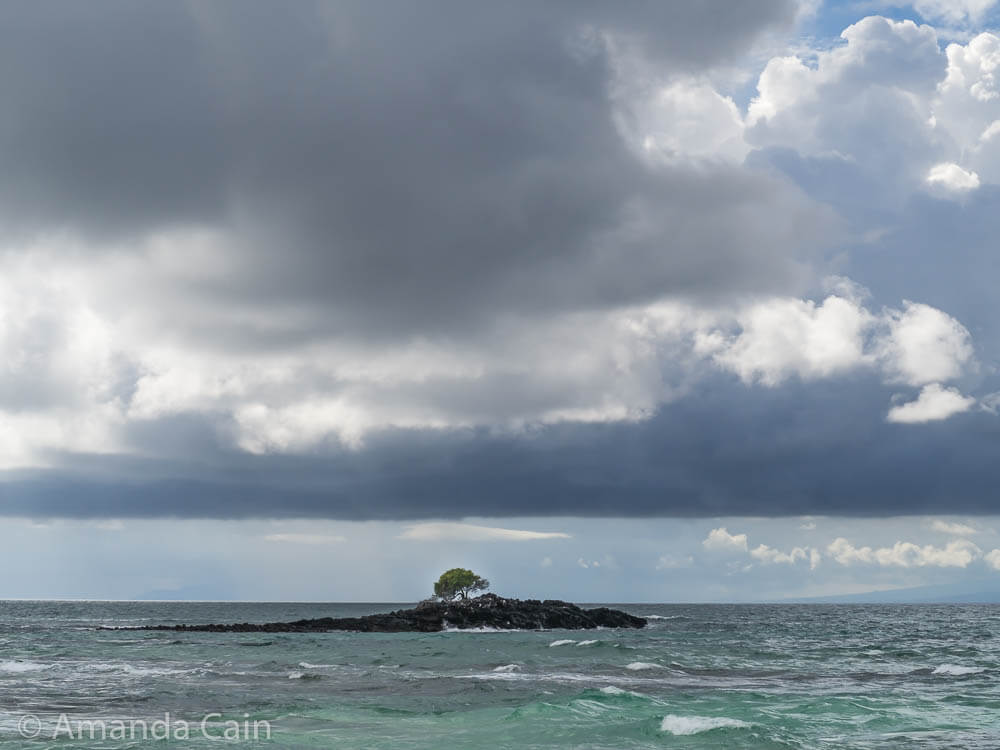 One lonely tree resisting the elements.