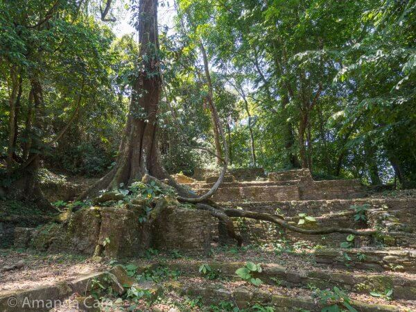 Archaeologists left some of the trees behind, still growing out of the ruins of Palenque. It's things like this that make you think you're in a movie or computer game.