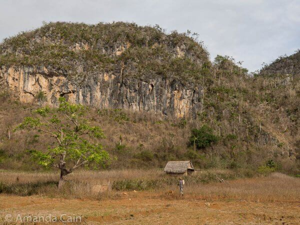 A farmer and his dog walk through their fields under the towering limestone formations.