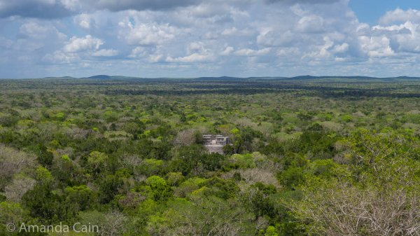 Apart from the handful of Mayan pyramids sticking out of the trees, all you can see for miles around Calakmul is the Great Green Ocean.