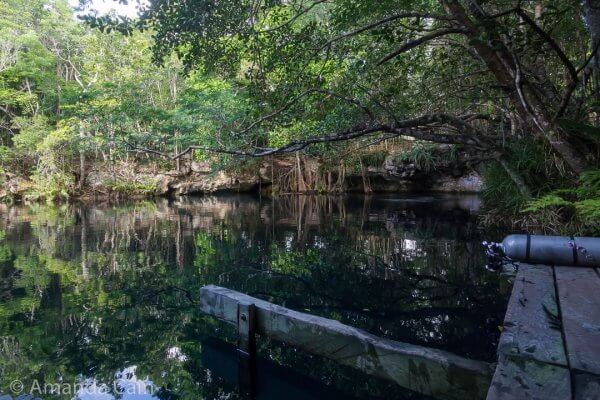 The beautiful, glassy waters of Cenote Angelita. On the surface everything looks so peaceful and normal.