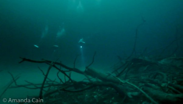 A group of divers (centre of the picture, in the distance) exploring the surreal foggy landscape & dead branches of Cenote Angelita.